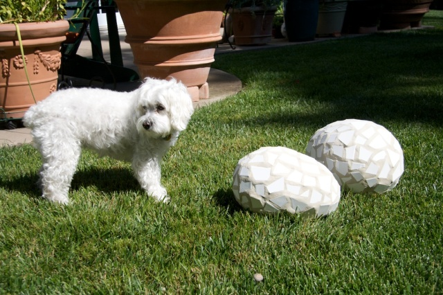 dog, mosaic eggs