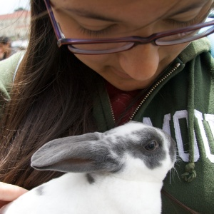 Rabbit, Vicky