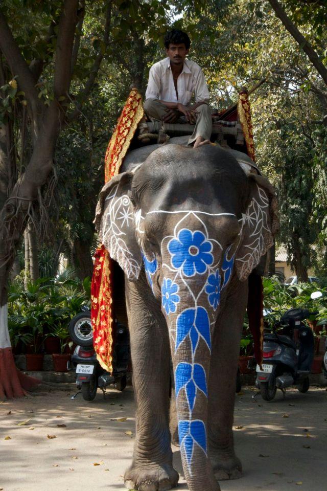 India - Elephant Rider