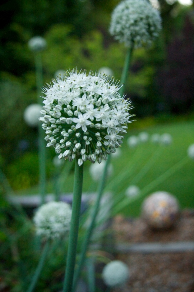 #July Photo a Day, Garden