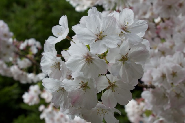 Flowers  135