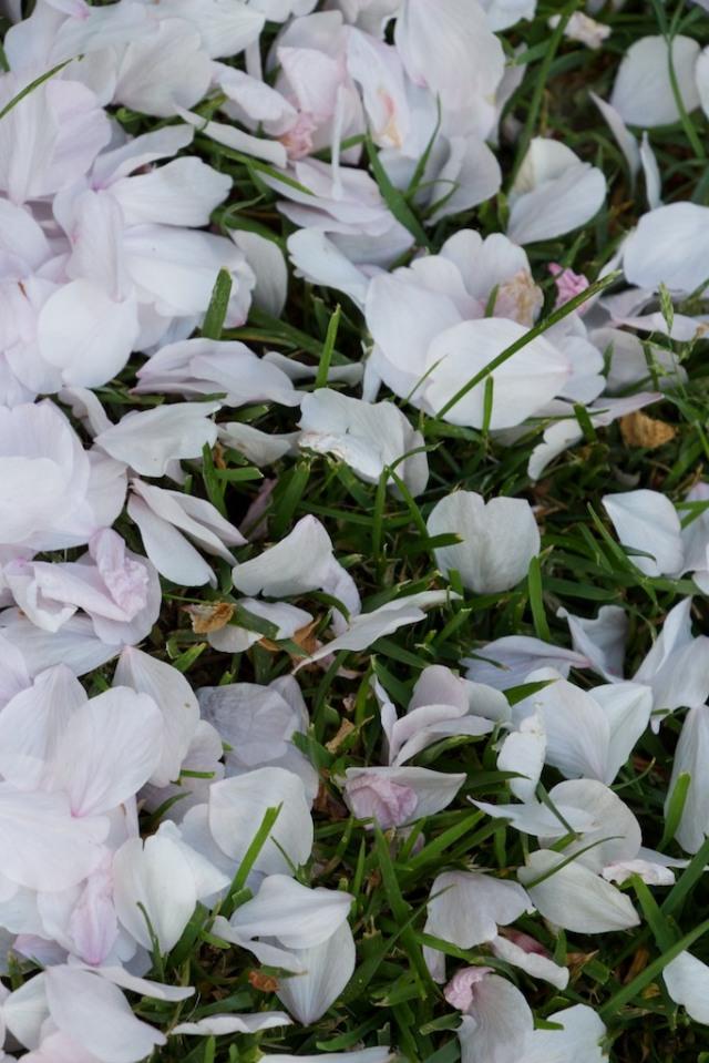Flowers  136