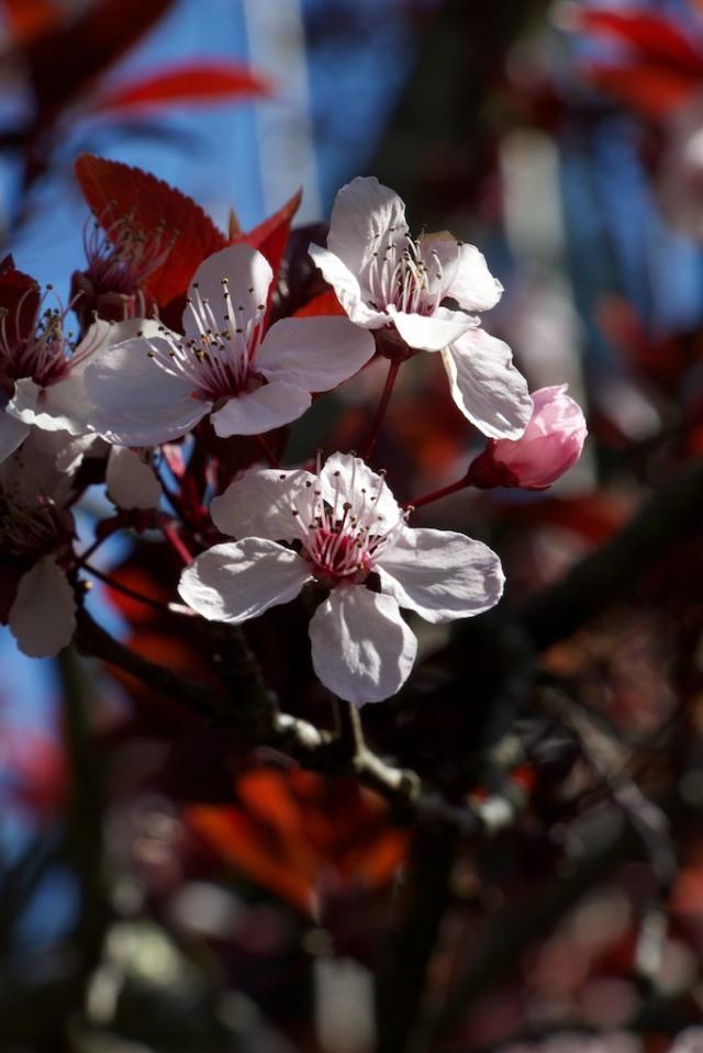 piecedgoods Plum Tree